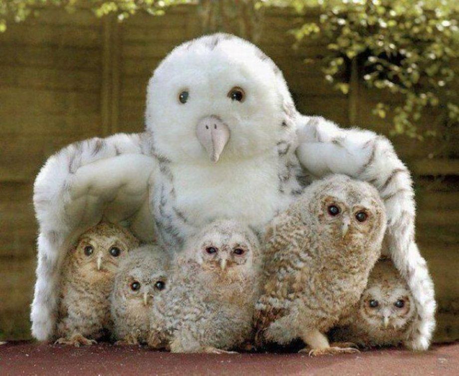 猛禽類かっこいい! 引用元  カッコいい猛禽類画像